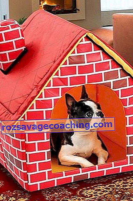 Houses for dogs in an apartment: features, types and DIY making